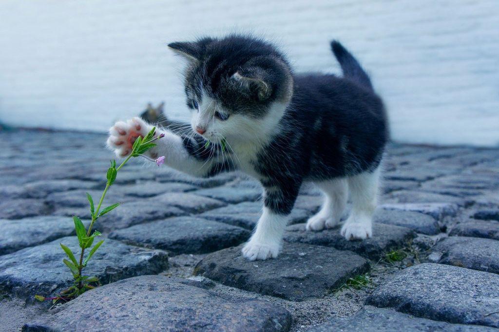 chat jouant fleur